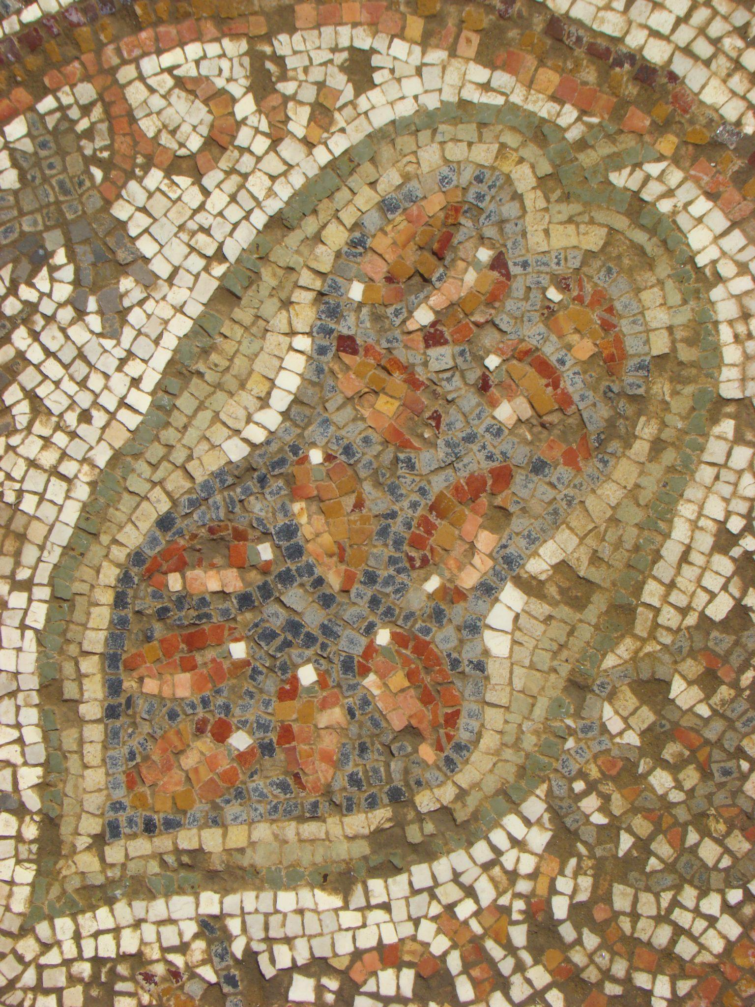 אתרוג חצוי, חשיפת הזרעים שנועדו כנראה לריבוי ומסחר, כנסיית חורבת בית לויה