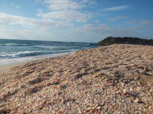 חוף פלמחים, תל יבנה ים