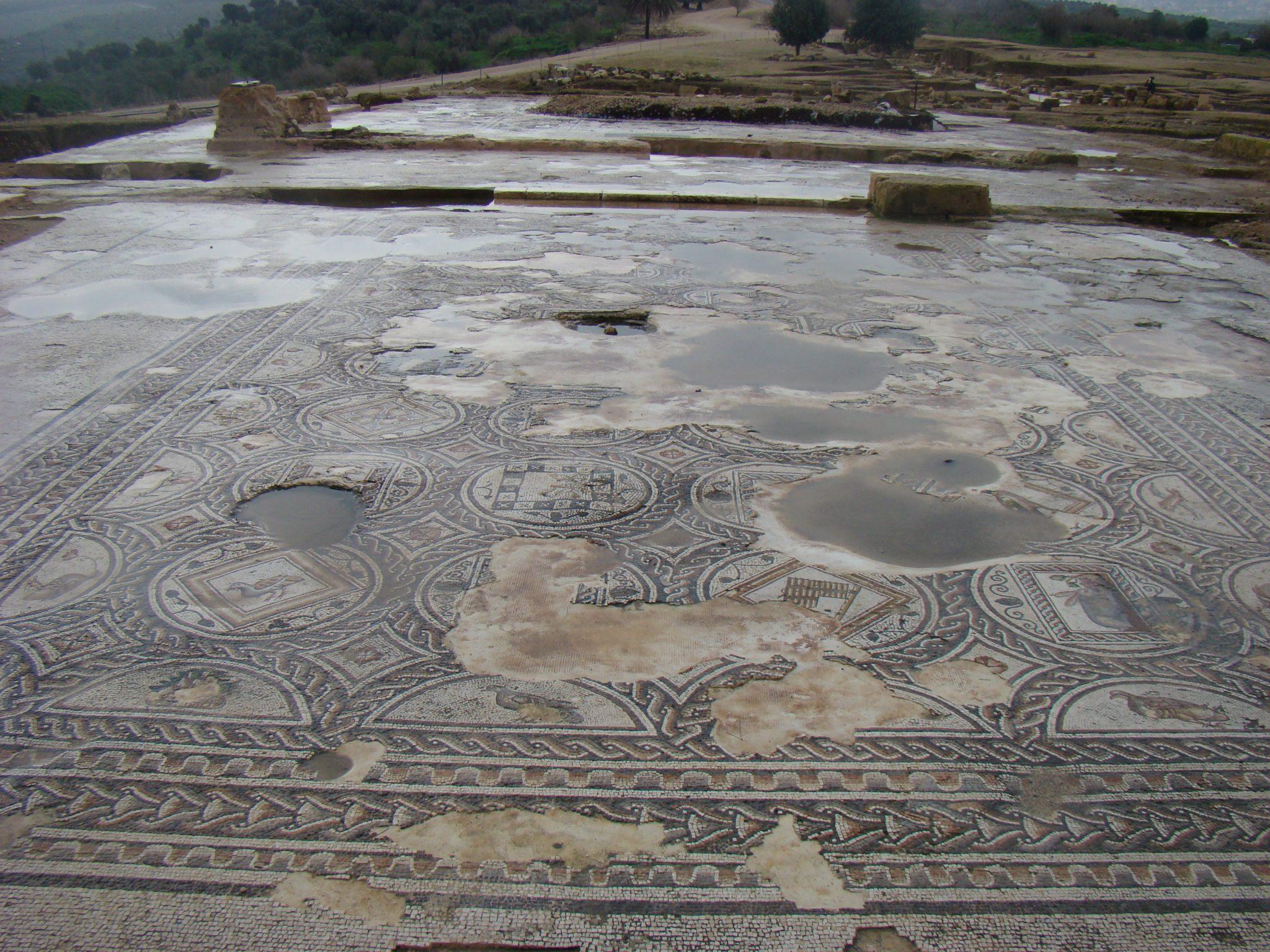 """פסיפס במבנה ציבורי בקארדו, בגן לאומי ציפורי (צילום: ד""""ר ענת אביטל)"""
