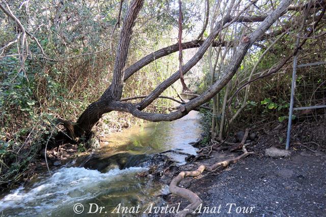"""המסלול הרטוב בשמורת המג'רסה (צילום: ד""""ר ענת אביטל)"""