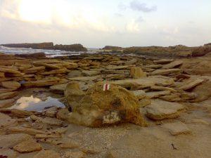 חוף דור-הבונים