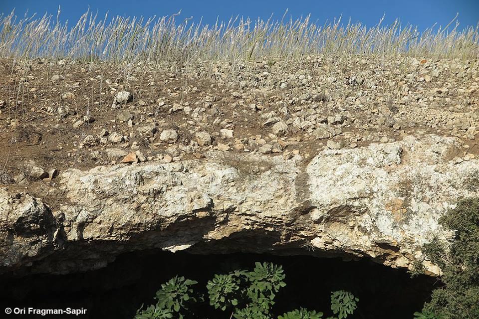 פריחת אלפי חצבים בתל יודפת, צילום: אורי פרגמן-ספיר