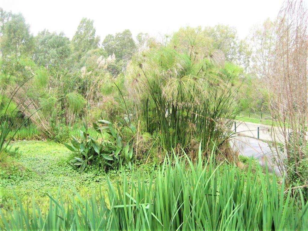 גן בוטני צמחיית מים מתוקים, גני יהושע נהר הירקון