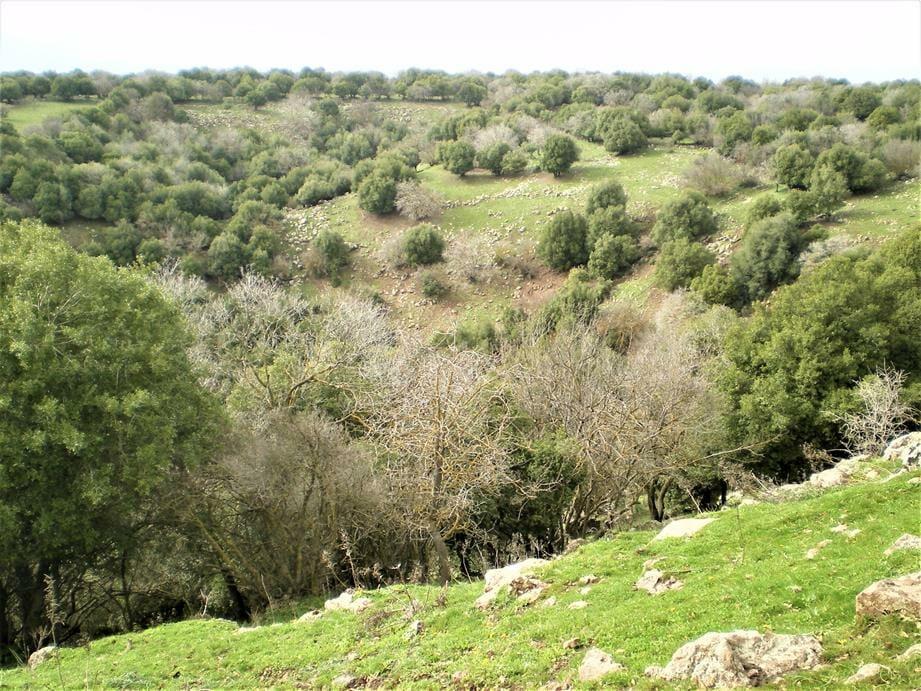 הג'ובה הגדולה ביער אודם בגולן, ויקיפדיה
