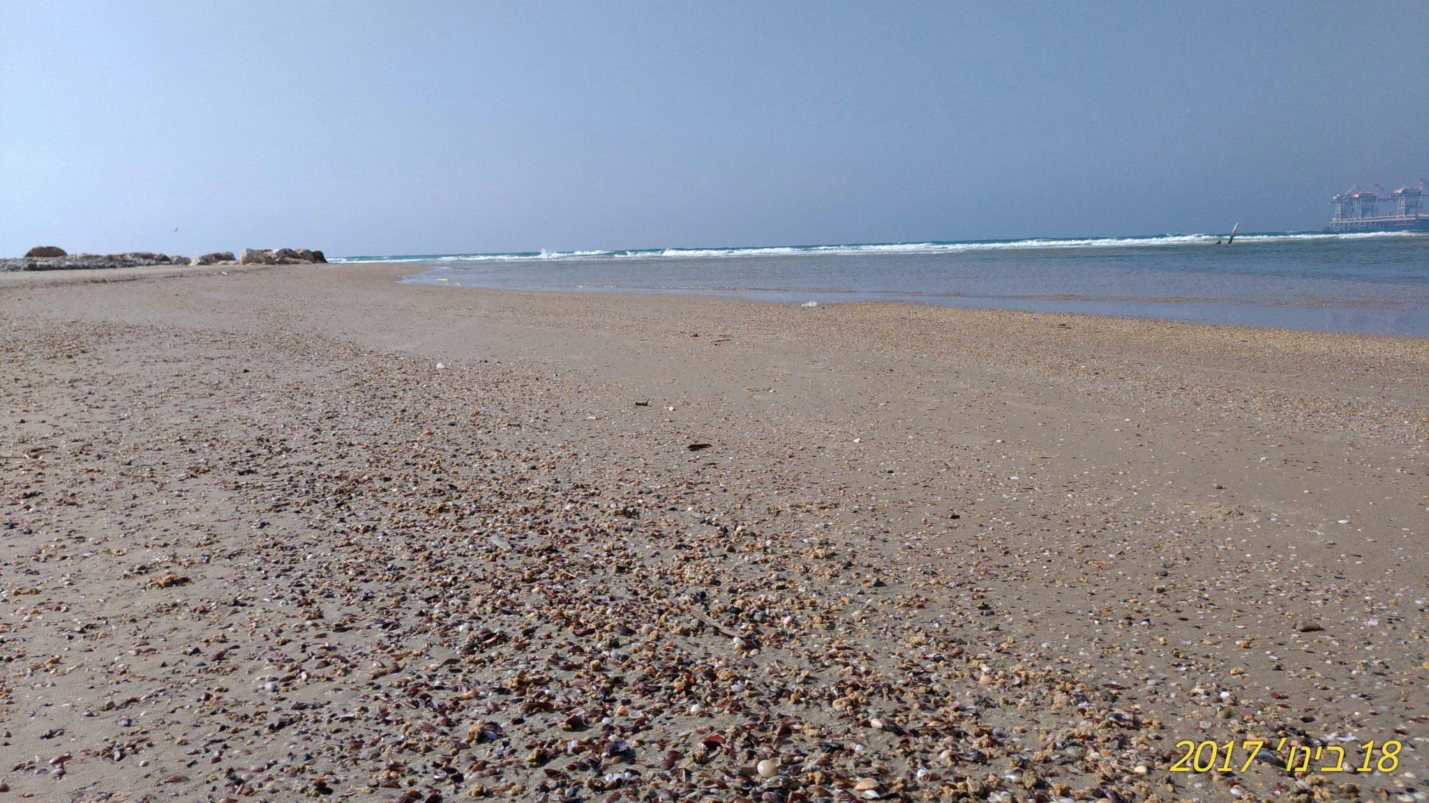 צדפים וצדפות על חוף טיילת נחל חדרה