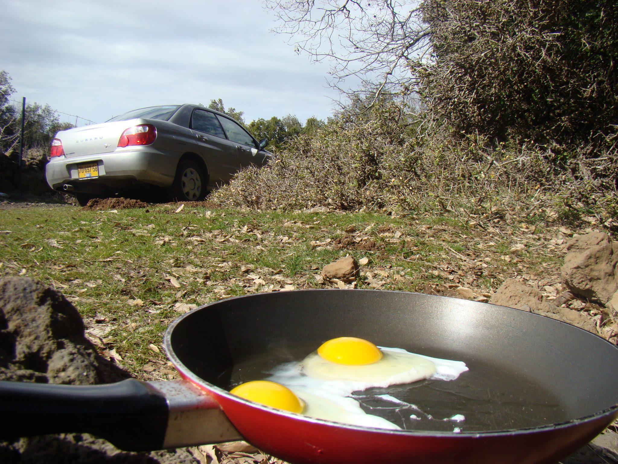 """ארוחת בוקר ביער אודם (צילום: ד""""ר ענת אביטל)"""