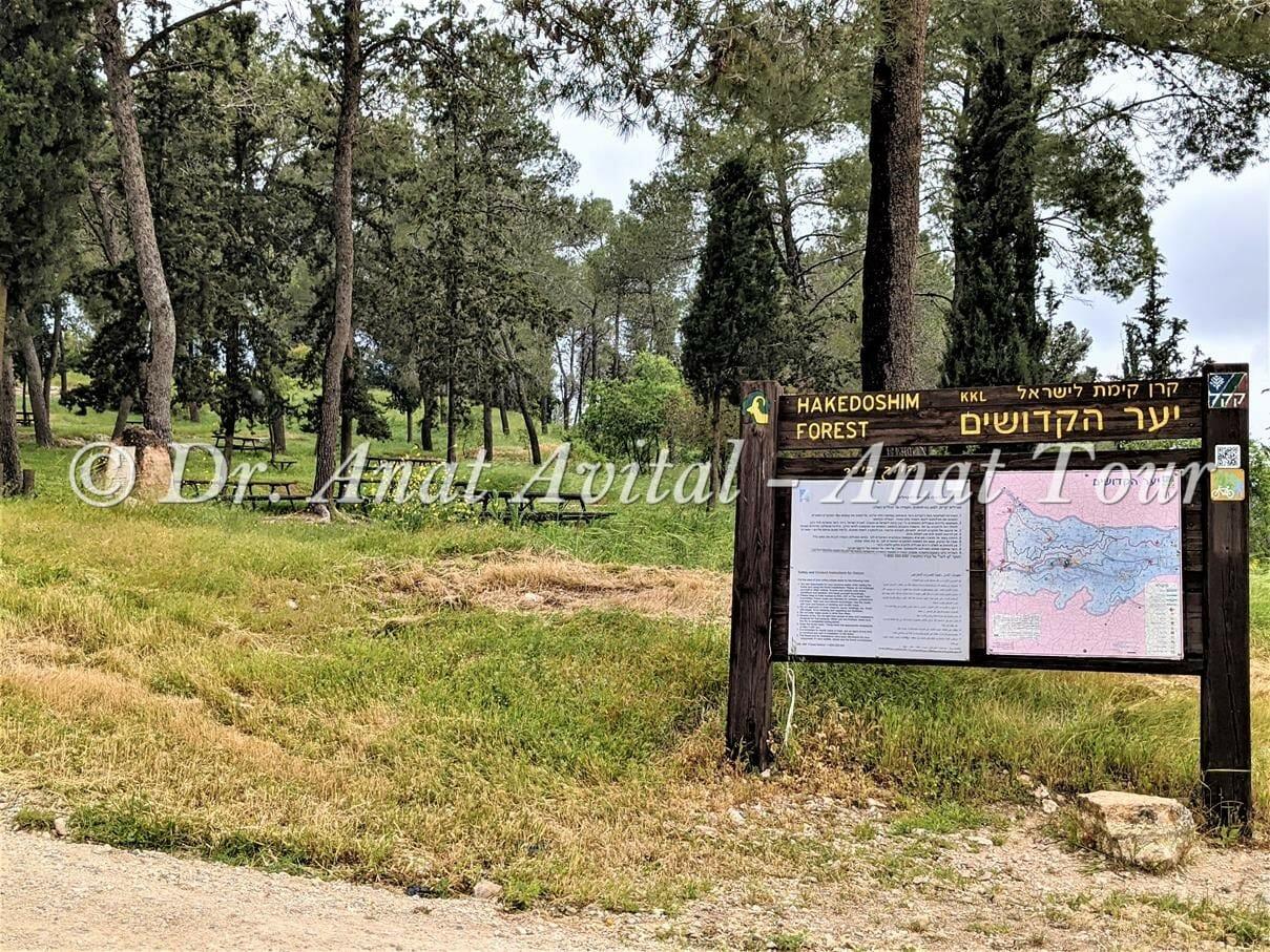 """יער הקדושים חניון מונגש על ערוץ נחל כסלון, צילום: ד""""ר ענת אביטל"""