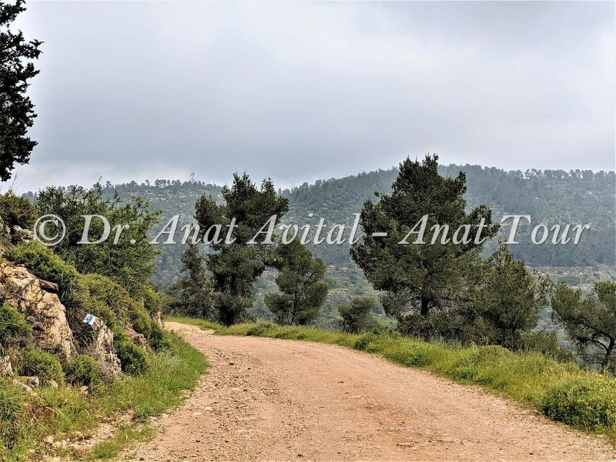 """יער הקדושים על מורדות נחל כסלון, צילום: ד""""ר ענת אביטל"""