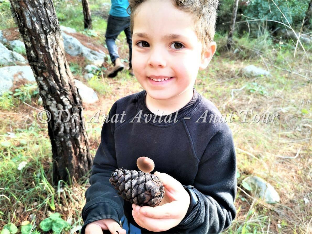"""פטריית פיטרת האצטרובל, לא לאכילה, יערות אורנים, בן שמן, צילום: ד""""ר ענת אביטל"""