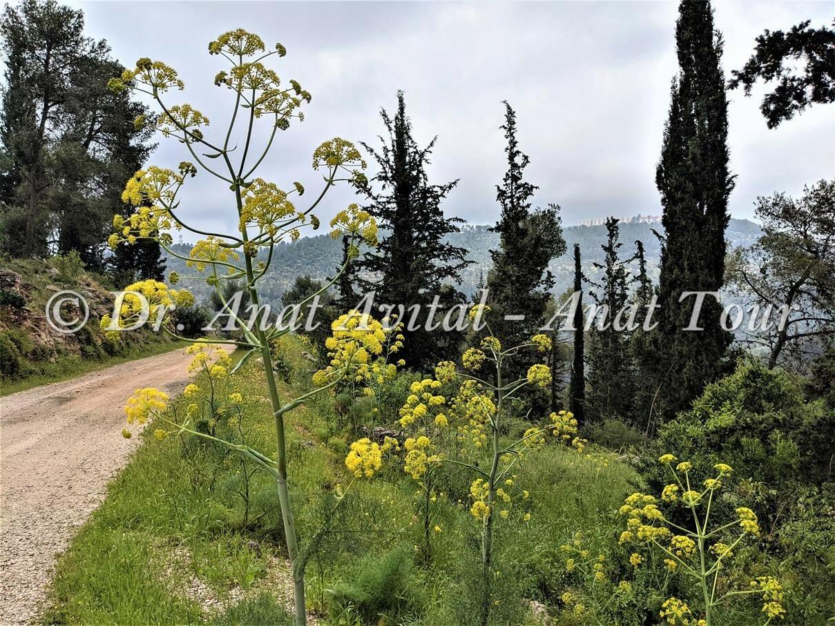 """יער הקדושים על מורדות ערוץ נחל כסלון, צילום: ד""""ר ענת אביטל"""