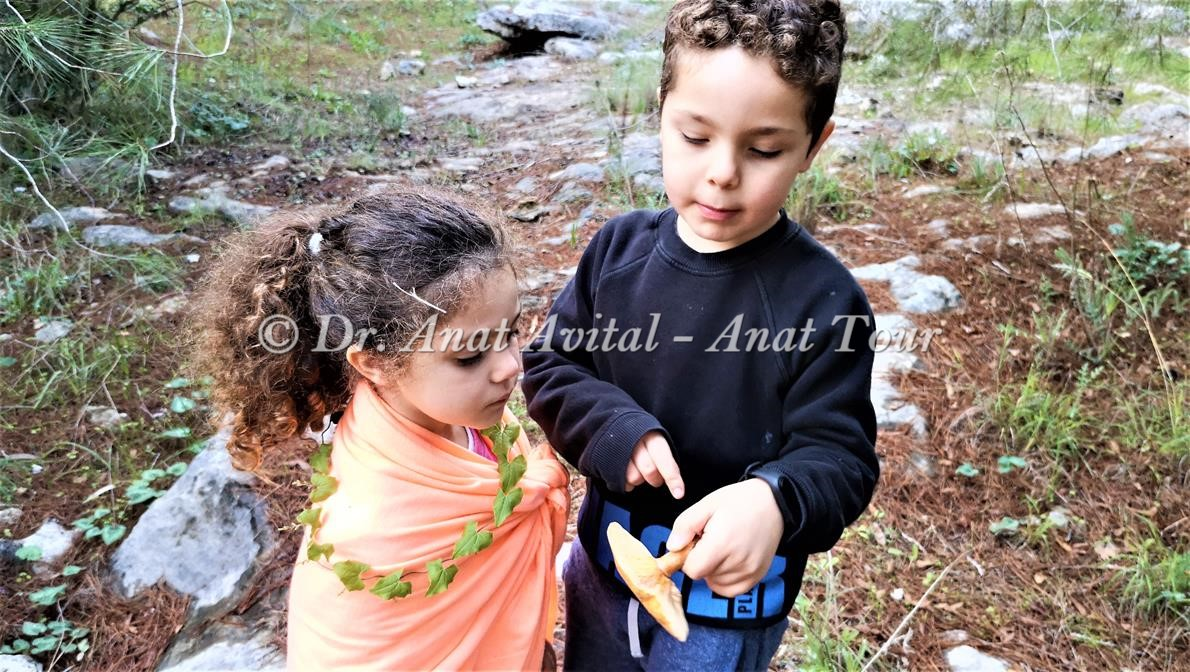 """פטרייה אכילה טעימה נטופה עריבה, ביערות בן שמן, צילום: דר"""" ענת אביטל"""