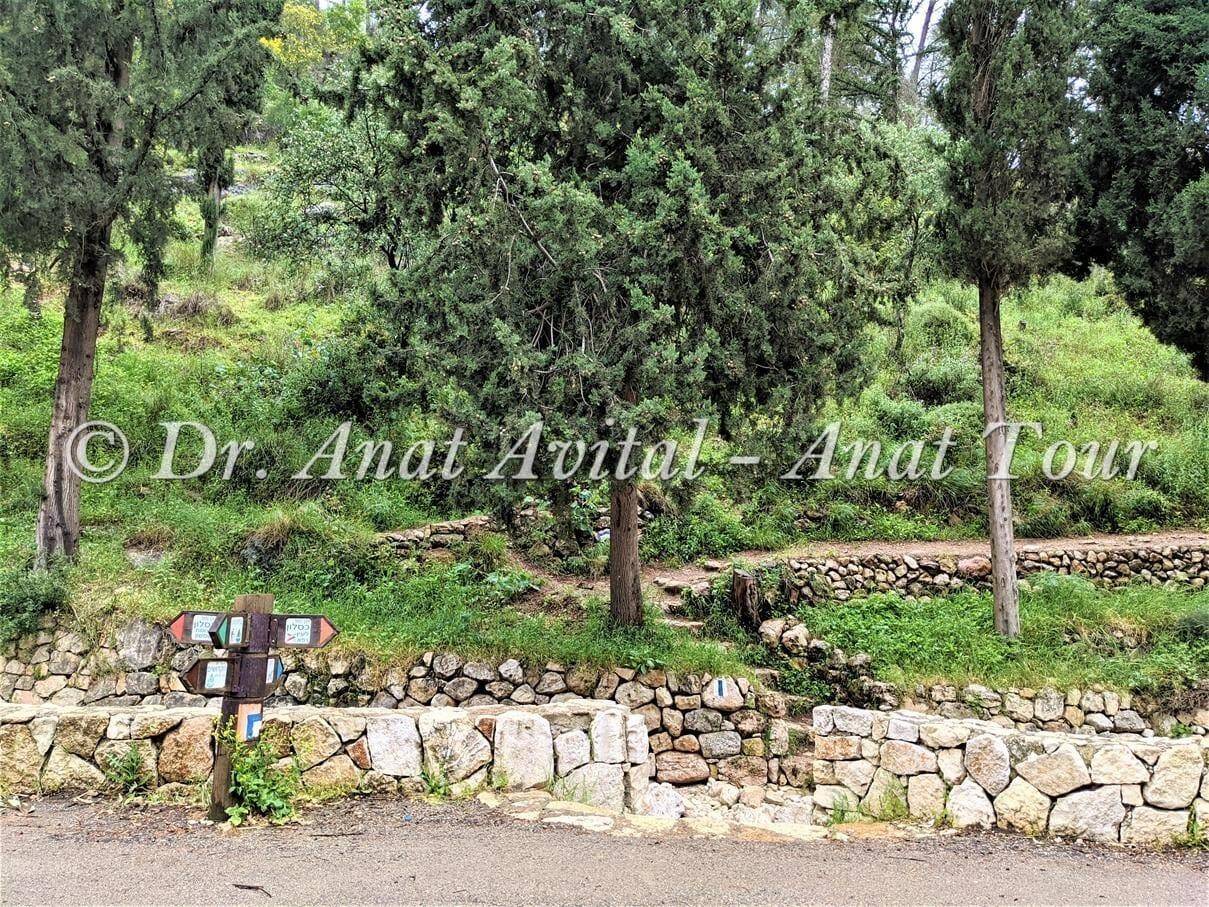 """יער הקדושים על ערוץ נחל כסלון, צילום: ד""""ר ענת אביטל"""