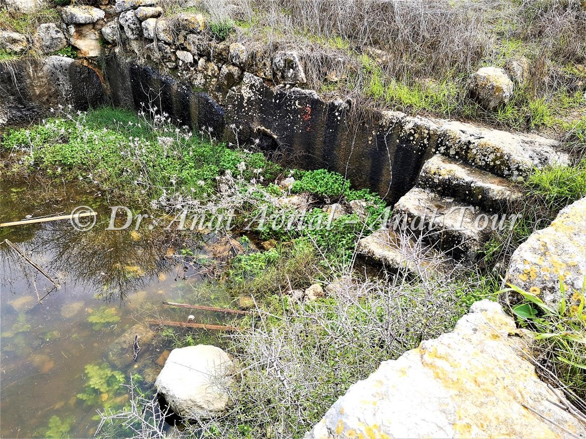 """בריכה ביזנטית, בקעת הנזירים יערות בן שמן- מודיעין, צילום: ד""""ר ענת אביטל"""