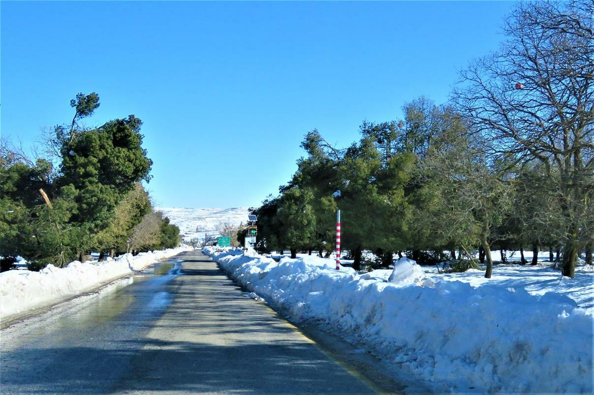 """יער אודם בגולן בחורף מושלג, צילם: ד""""ר ענת אביטל"""