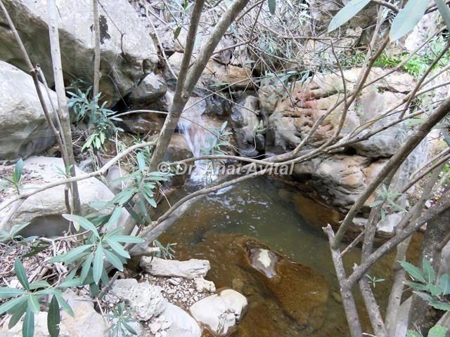 """נחל חזורי (צילום: ד""""ר ענת אביטל)"""