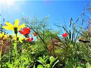 """פריחת חורף ואביב בדרך הקיסר, שביל ישראל, צילום: ד""""ר ענת אביטל"""