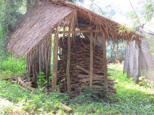 קני במבוק לבערה, שמורת השבטים בצפון תאילנד, צ'יאנג ראי (צילום: ד