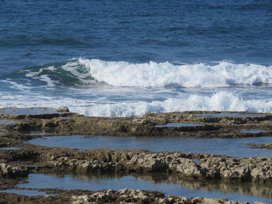 """פארק הכט חיפה, שמורת חוף וים שקמונה (צילום: ד""""ר ענת אביטל)"""
