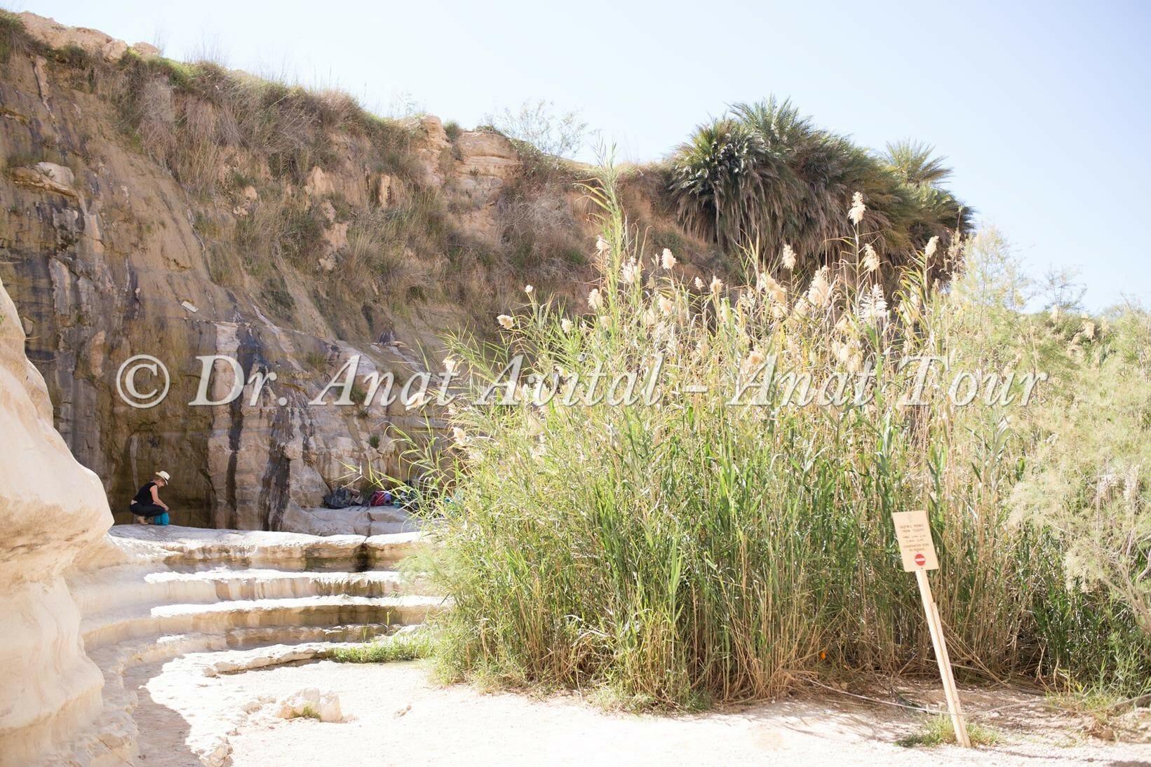 """עין עקב: מעין וברכה בהר הנגב, נחל צין, צילום: ד""""ר ענת אביטל"""