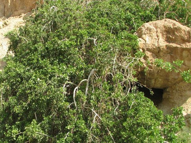 נחל סלוודורה במדבר יהודה, ויקיפדיה