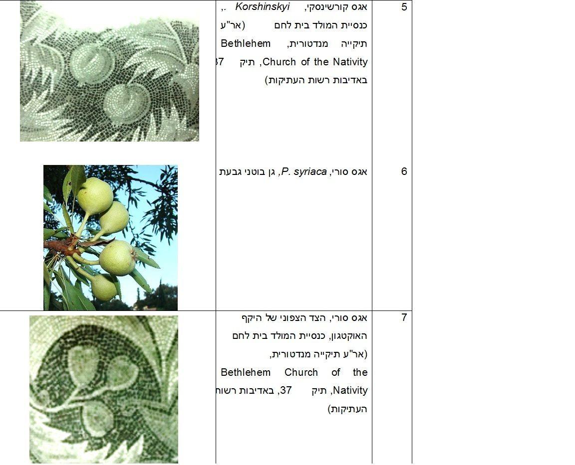 תיאורי חקלאות בפסיפסים מירושלים ויהודה בתקופות הרומית והביזנטית, טבלת איורים 5-7 כנס ירושלים 22, ינואר 2017