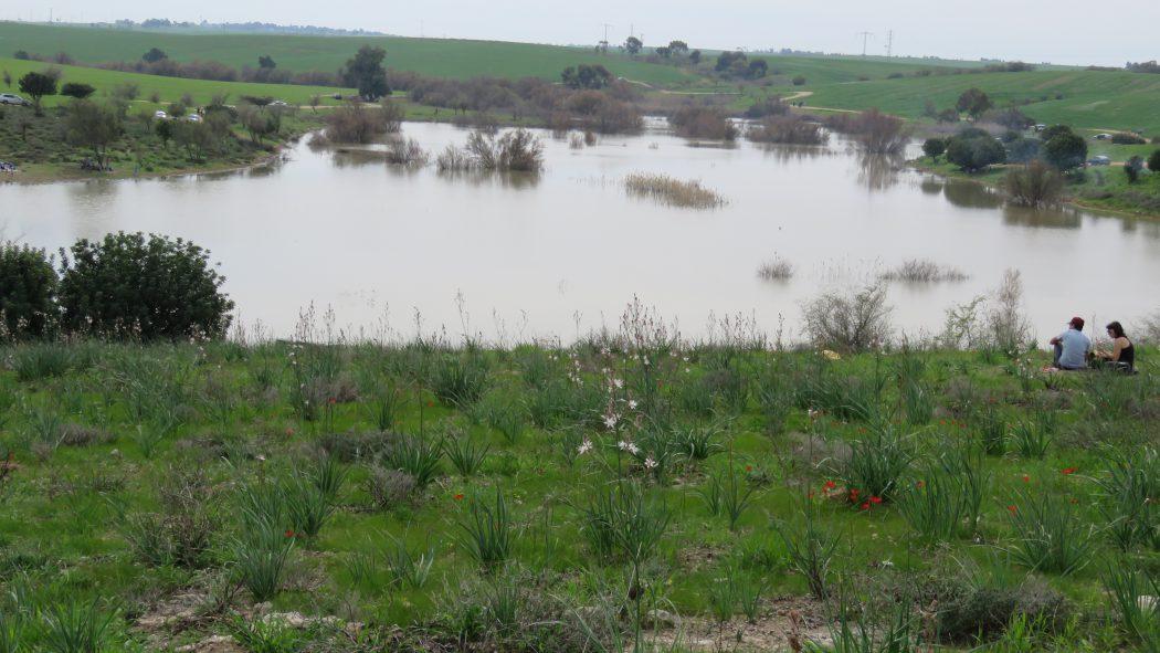 אגם עונתי על סכר נחל פורה בשמורת פורה (צילום: ד