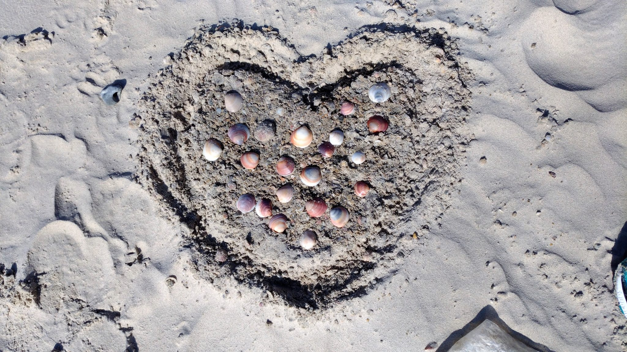 """צדפי לבו של האדם... (יצירה של תלמידות בית יעקב פרי תואר מאלעד) בחוף טיילת שפך נחל חדרה (צילום: ד""""ר ענת אביטל)"""