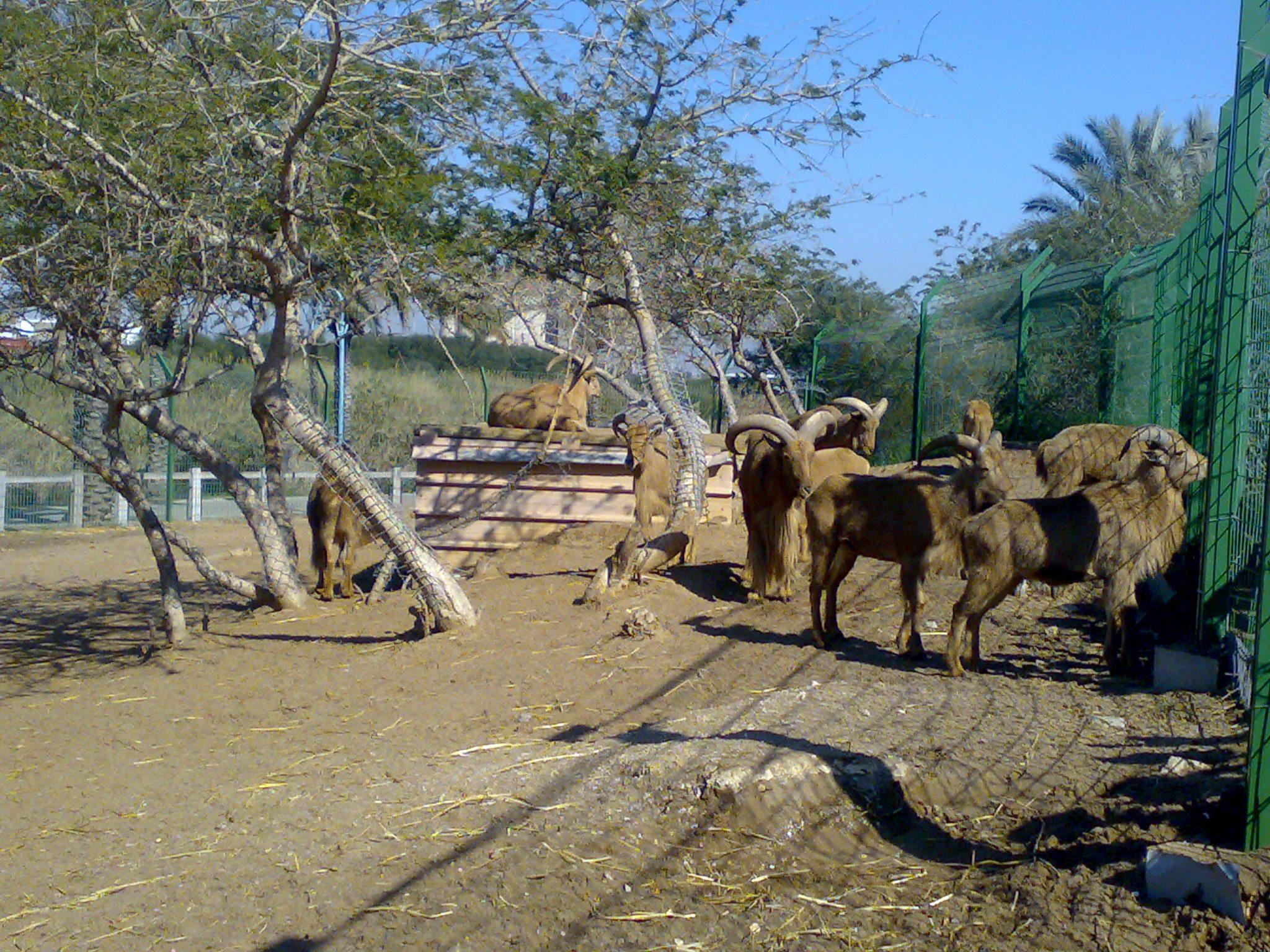 """גן חיות ספארי, פארק לכיש אשדוד (צילום: ד""""ר ענת אביטל)"""