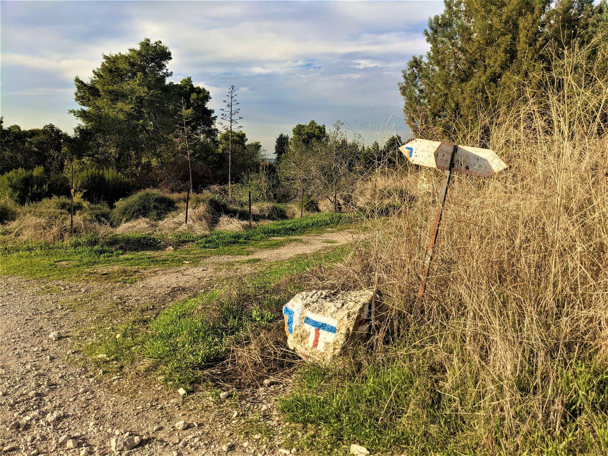 """שביל ישראל בין כרמי זיתים עתיקים מנזר השתקנים לטרון, צילום: ד""""ר ענת אביטל"""