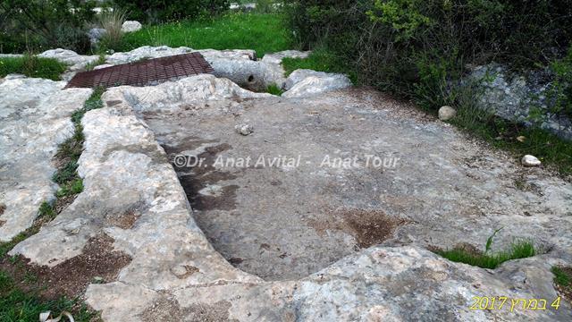 """גת חצובה בסלע, גבעת שר מודיעין (צילום: ד""""ר ענת אביטל)"""