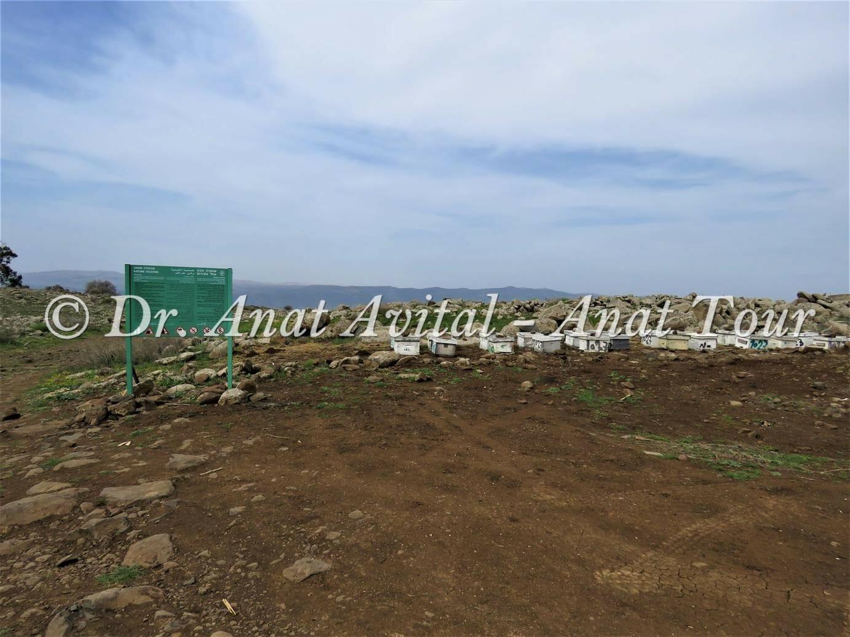 """נחל עורבים בצפון הגולן, צילום: ד""""ר ענת אביטל"""