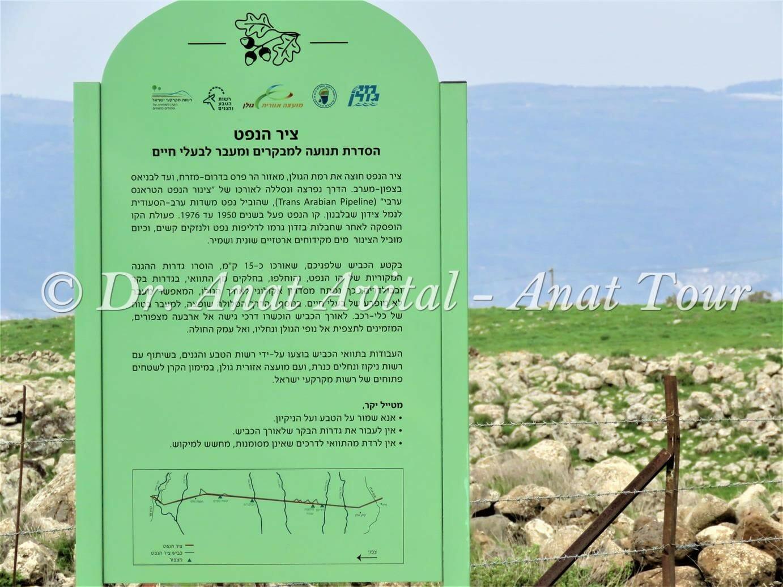 """ציר הנפט ליד נחל עורבים בצפון הגולן, צילום: ד""""ר ענת אביטל"""