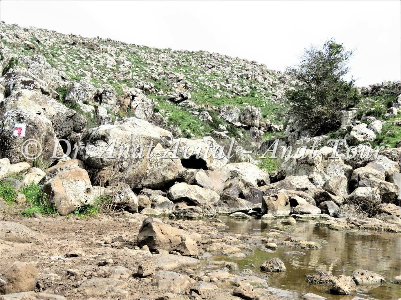 """מעבר מים בנחל עורבים, צילום: ד""""ר ענת אביטל"""