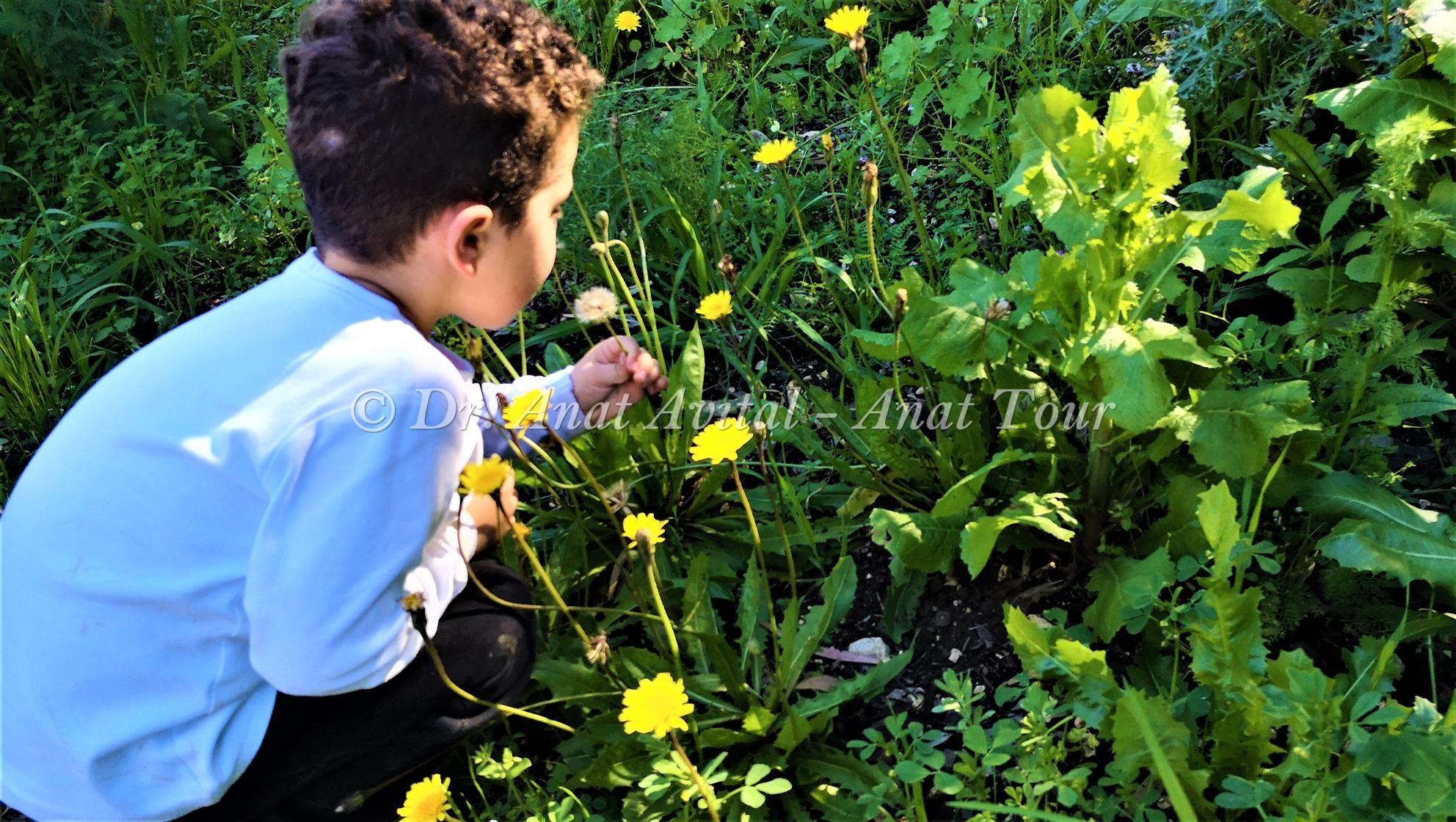 """פיזור זרעי הסבא של כתמה עבת שורשים (ד""""א ענת אביטל)"""
