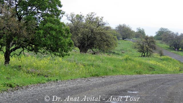 """יער פארק אלון התבור בדרך לברכת המשושים, שמורת יהודייה, צילום: ד""""ר ענת אביטל"""