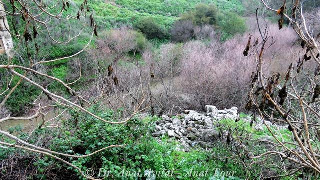 """הירדן ההררי (צילום: ד""""ר ענת אביטל)"""