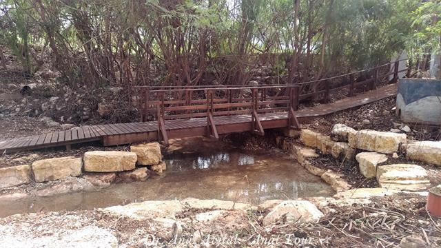 """השביל הרטוב, מסלול הליכה במים בנחל שוקק, עמק המעיינות - עמק בית שאן, צילום: ד""""ר ענת אביטל"""