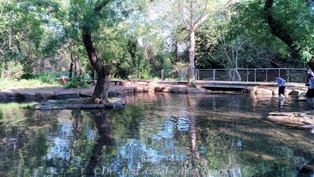 """ברכת שיכשון בשמורת טבע נחל דן, צילום: ד""""ר ענת אביטל"""