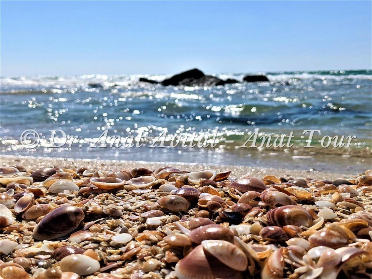 """חוף ים שמורת ניצנים, צילום: ד""""ר ענת אביטל"""
