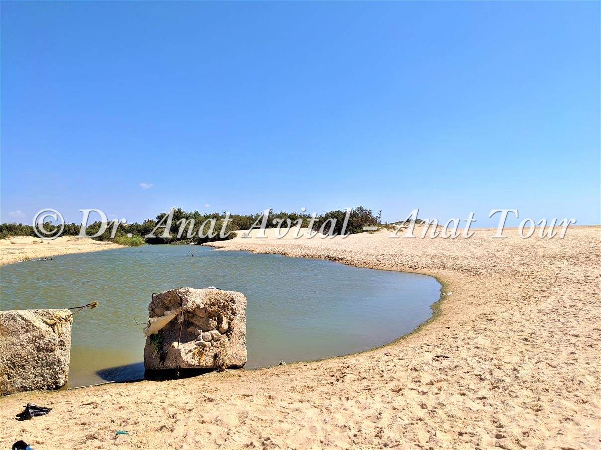 """לגונה של מים מתוקים בשפך נחל אבטח בשמורת ים אבטח, חוף רחצה ניצנים, צילום: ד""""ר ענת אביטל"""