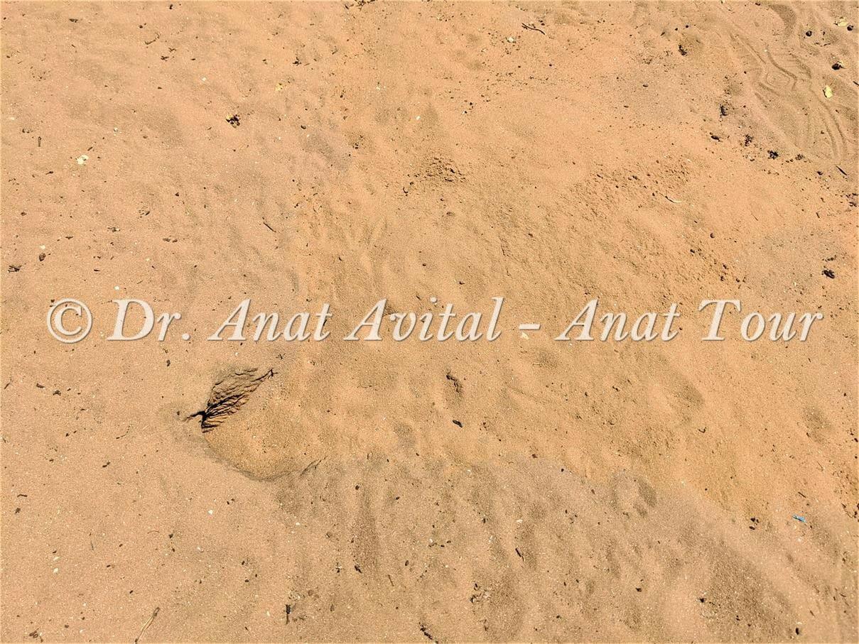 """מחילות כוח אפור, שמורת חולות ניצנים,טיול אל ים החולות, צילום: ד""""ר ענת אביטל"""