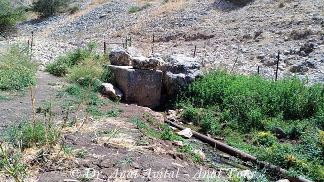 """עין ארבל, במורדות מבצר הארבל - גן לאומי מצוקי הארבל (צילום: ד""""ר ענת אביטל)"""