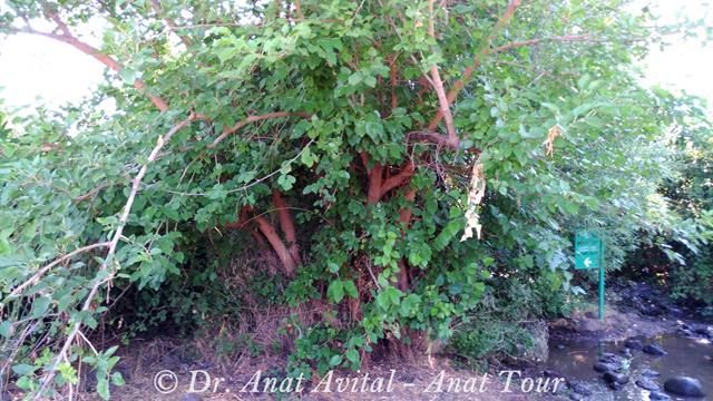 """שלט שביל מילוט בערוץ הזאכי תחת לעץ תות,צילום: ד""""ר ענת אביטל"""