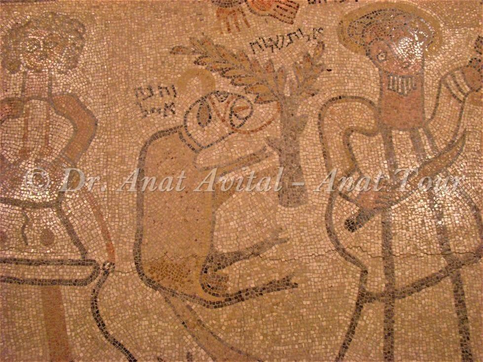 """כבש - איל עקדת יצחק בית אלפא. צילום: ד""""ר ענת אביטל"""
