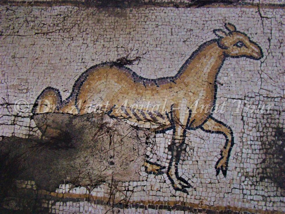 """כבש עם זנב ארוך, פסיפס הציפורים קיסריה (ד""""ר ענת אביטל)"""