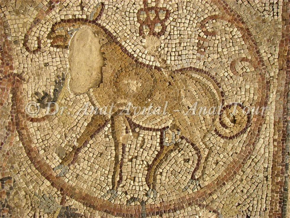 """כבש עם זנב ארוך ומגולגל, בית הכנסת העתיק של  מעון נירים, צילום: ד""""ר ענת אביטל"""