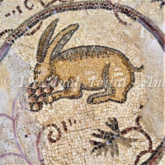 """ארנבת אוכלת ענבים, פסיפס מקיסריה העתיקה מערבית לקמרונות הנמל, צילום: ד""""ר ענת אביטל"""