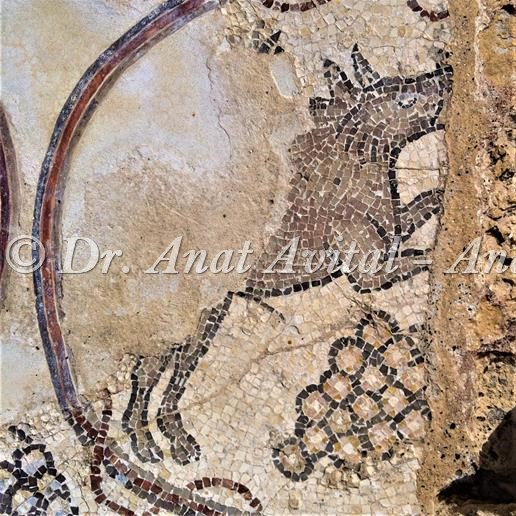 """חזיר בר זכר, פסיפס מקיסריה העתיקה מערבית לקמרונות הנמל, צילום: ד""""ר ענת אביטל"""