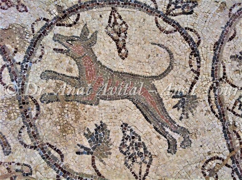 """כלב, פסיפס מקיסריה העתיקה מערבית לקמרונות הנמל, צילום: ד""""ר ענת אביטל"""