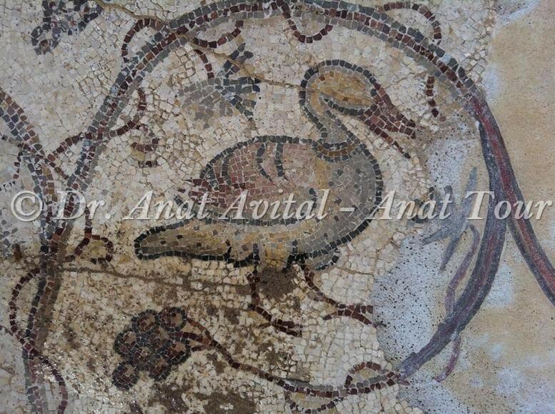 """קזרקה חלודית או יאורית מצרית, פסיפס מקיסריה העתיקה מערבית לקמרונות הנמל, צילום: ד""""ר ענת אביטל"""